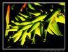 Alien Aloe