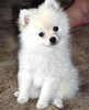 a dog to accompany you