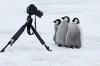 Photo Safari in Antarctica